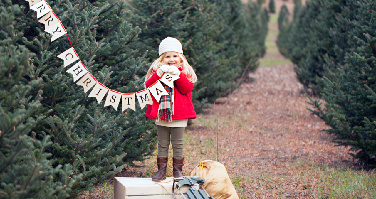Looking for a Christmas Tree Farm for Sale? Read This First