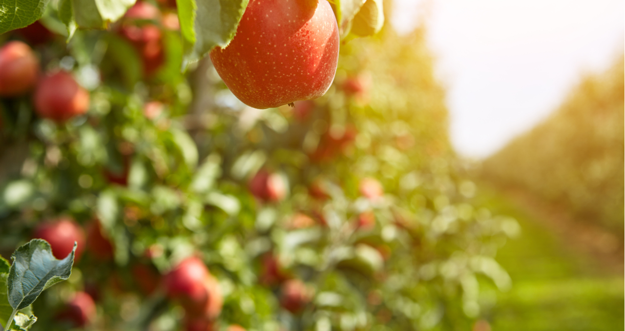 Looking for Orchards for Sale? Read This Guide First